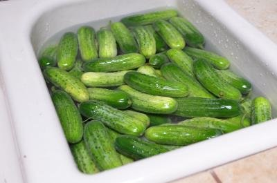 A sink full of cucumbers being rinsed
